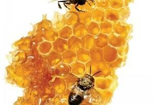 miele per dimagrire