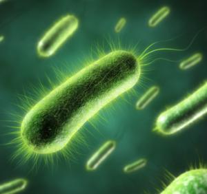batterio dieta