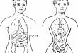 Il corsetto per la dieta