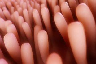 La funzione dei villi nella digestione