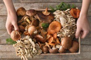 I funghi come alimento dietetico